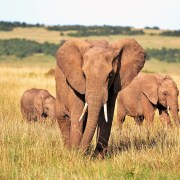 Tips for eco-friendly travel in South Africa