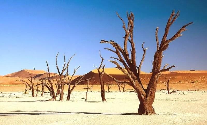 Dead Acacia erioloba in Deadvlei, Namibia