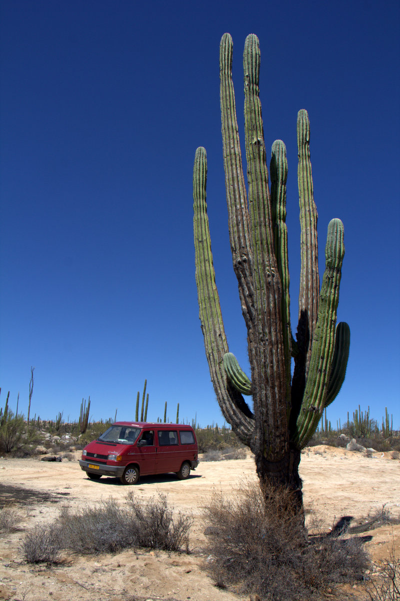 Tiny van next to big cactus