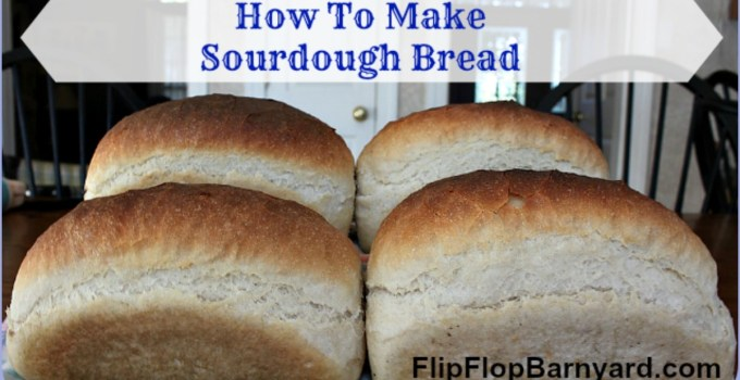 How to make delicious sourdough bread