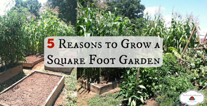 Here are 5 great reasons to grow a square foot garden. A square foot garden is a great way to have homegrown vegetables.
