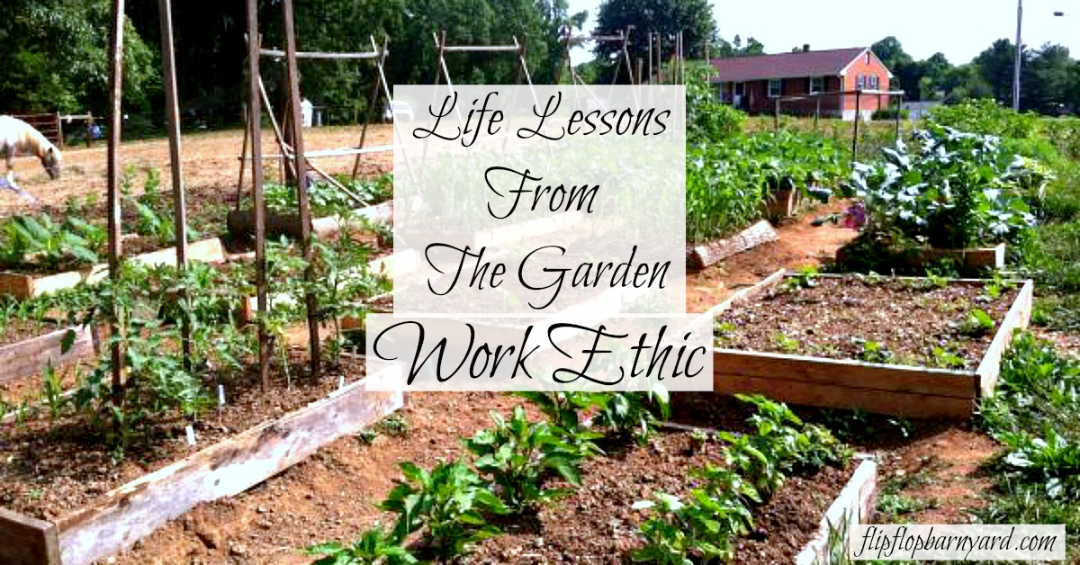 Learning lessons from the garden