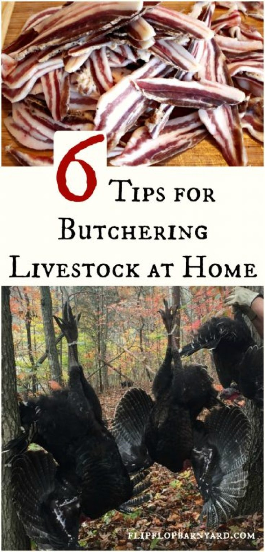 Livestock Butchering at Home