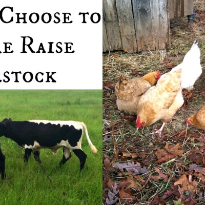 There are many reasons to raise pastured livestock. This is why we grass base farm.