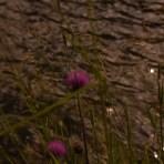 Blumen wo das Auge hinschaut