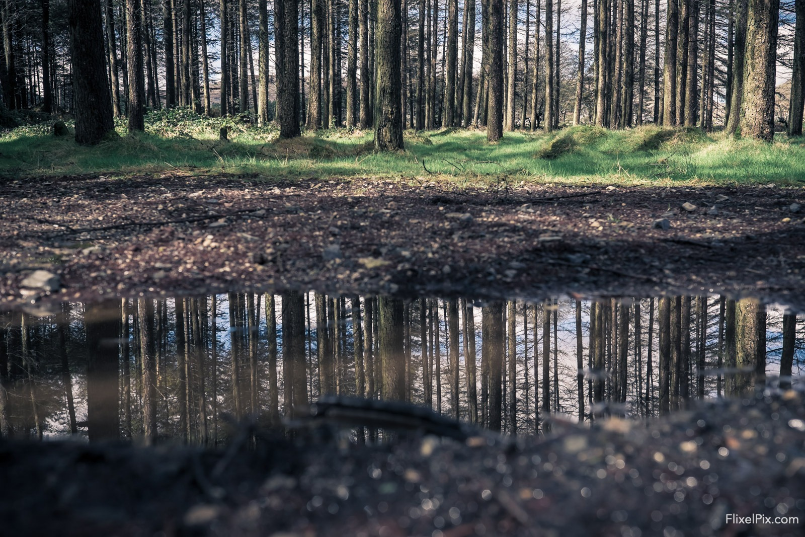 photographing puddles