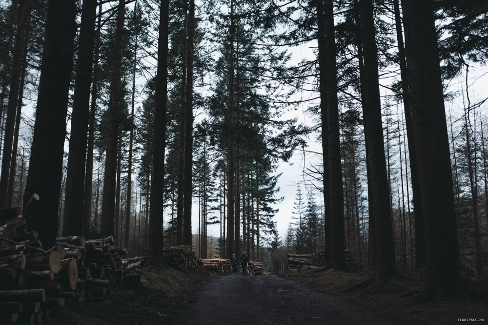 Forest X100F