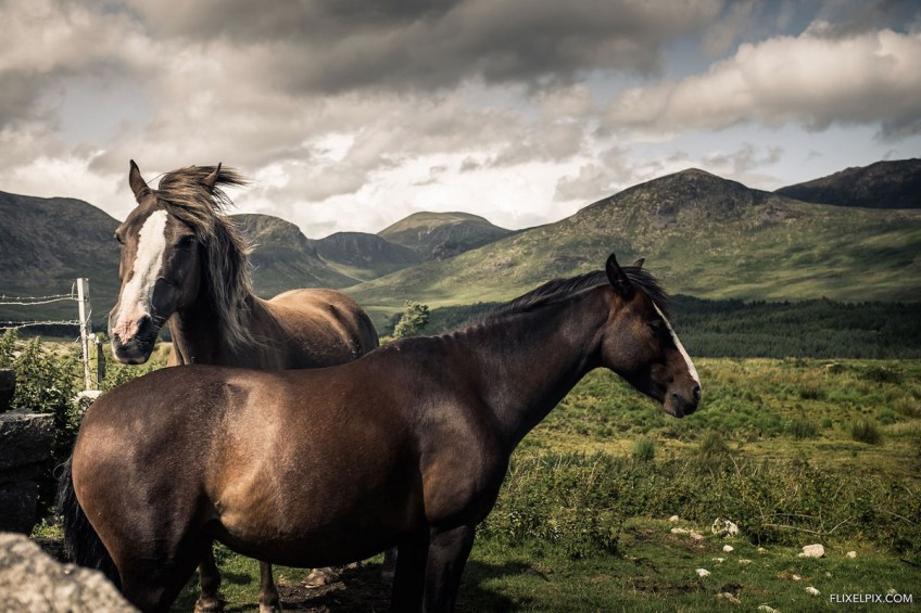 Horses in the Mournes