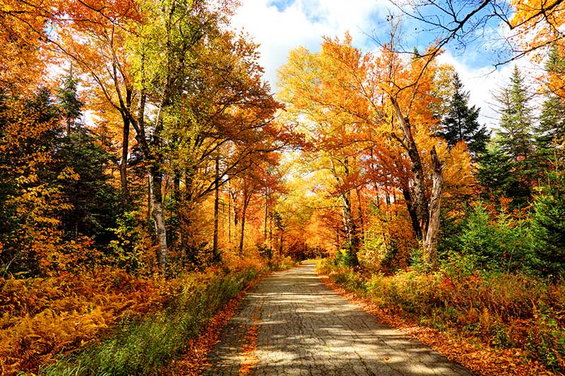 Planning a Trip to See Fall Foliage