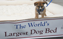 World's Largest Dog Bed