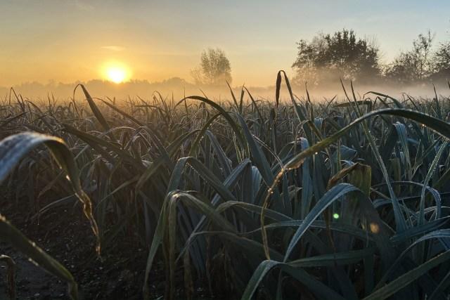 GROW di Daan Roosegaarde la bellezza dell'agricoltura | Livegreenblog