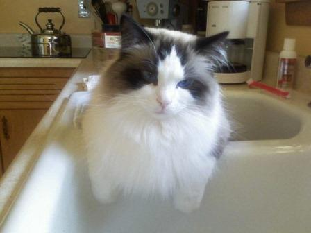 Sam in the kitchen sink loved by Kimberly Helgeson