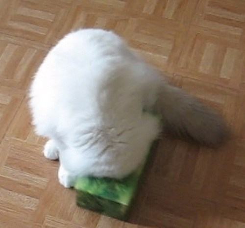 Boris has a fascination for empty tissues boxes. This one was taken when he was 7mts old. We always seem to have an empty tissue box somewhere on the floor.