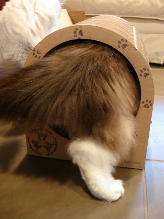 Charlie Fits in the The Original Catpods