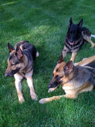 Marley, Napa and Tucker