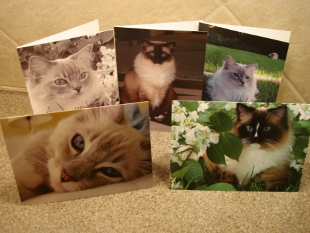 Floppycats Ragdoll Cat Pictures Greeting Cards