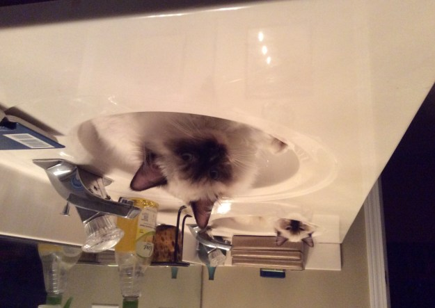 Moka and Lola in sinks Loved by Rachel