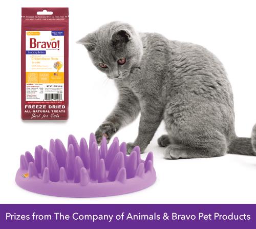 BONUS Giveaway GREEN Cat Catch Feeder and Bravo Treats