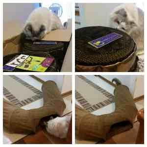 Neko Pawdz UI Cat Play Tunnel System Giveaway Winner 3