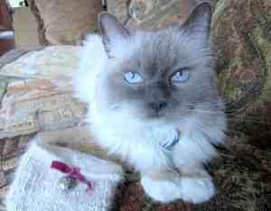 Cat Hair Yarn Interview with Irene Lerman of PetHair2KnitWear 5