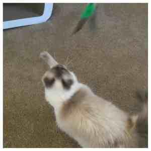 Best Cat Toys The Bird Catcher PRO EX