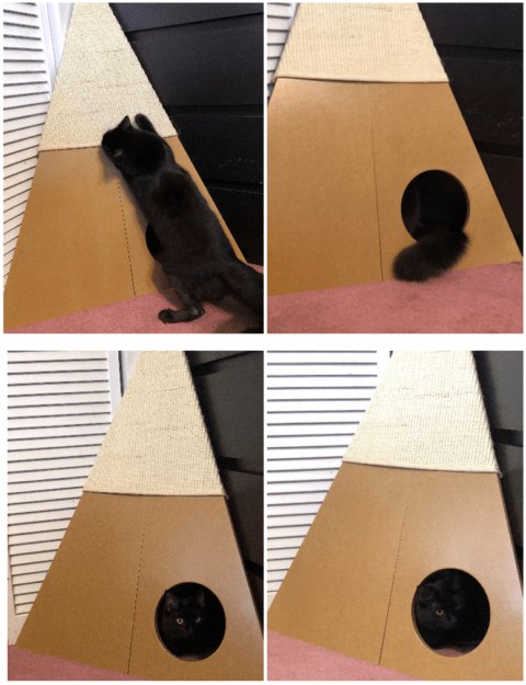 SmartCat Bootsies Corner Cat Scratcher Product Review