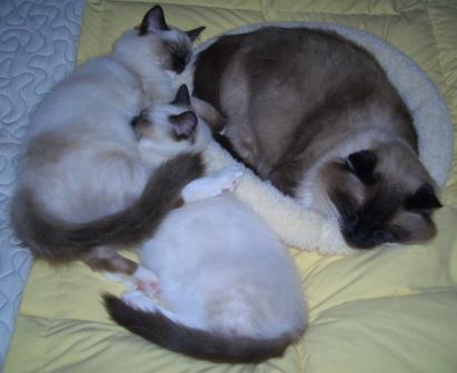 Caymus, Murphy and Rags on my Bed