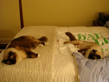 Rags and Caymus Sleeping