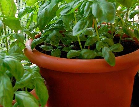 L'orto in balcone, si può fare