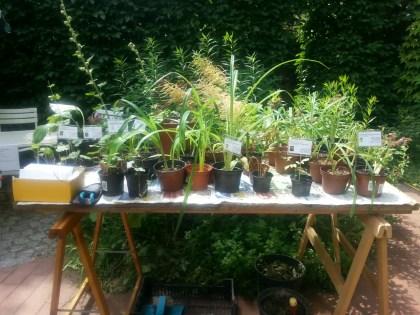 Die Pflanzen wurden auch vorgestellt.