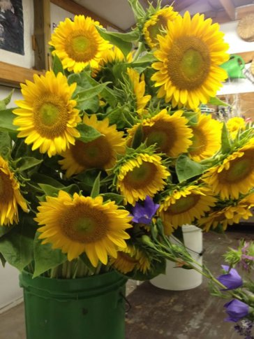 green-ctr-sunflowers