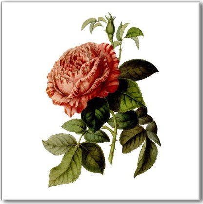 Vintage dusky pink rose wall tile, flower and bud with green leaves on a white square background