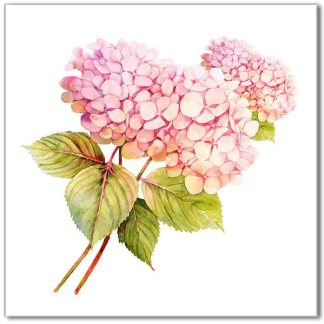 Hydrangea tile - Floral ceramic wall tile, vintage style shabby chic pink hydrangea flowers on a white square background
