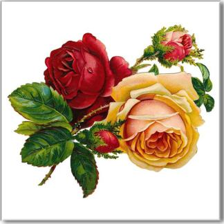 Vintage rose wall tile, pink, red, yellow, cream roses and buds on a white square background