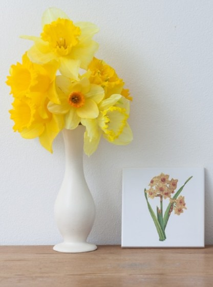Yellow Daffodils Ceramic Wall Tile from FloralTiles.co.uk