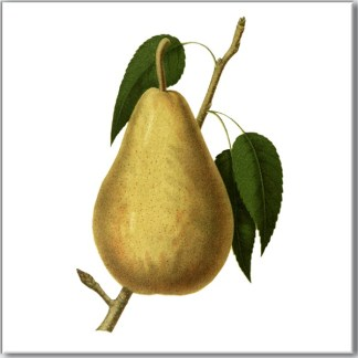 Garden Pear Ceramic Wall Tile