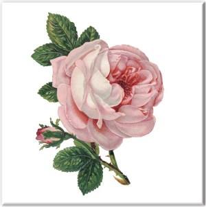 Pink Tiles - Baby Pink Rose Wall Tile