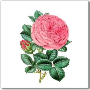 Pink Tiles - Pink Vintage Style Rose Wall Tile