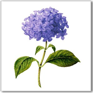 Blue Tiles - Blue Hydrangea on a white background, ceramic wall tile