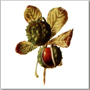 Green Tiles - Horse Chestnut Tree Leaves with Conkers Ceramic Wall Tile