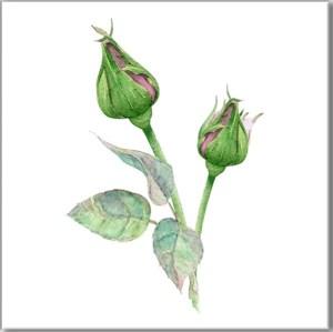Green Tiles - Green Rosebuds Ceramic Wall Tile