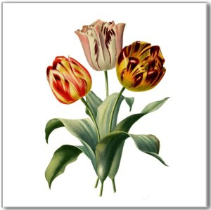Flower Tiles - Tulip flowers ceramic wall tile