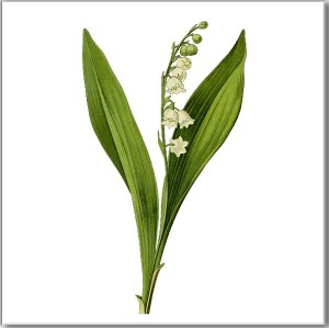 Flower Tiles - Lily of the Valley flower ceramic wall tile