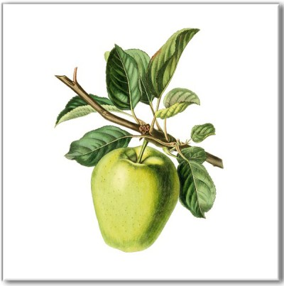 Kitchen tiles ideas - green apple fruit ceramic wall tile