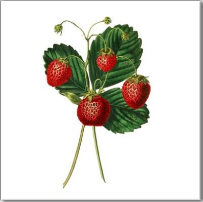 Kitchen Tiles Ideas - Strawberry fruit ceramic wall tile