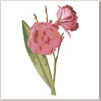 Dark Pink Dianthus Flowers Ceramic Wall Tile