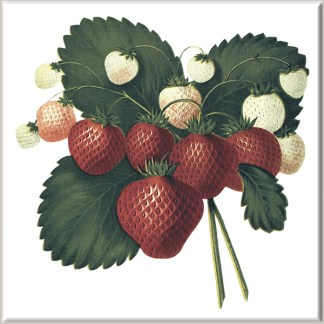 Hanging Strawberry Fruit Ceramic Wall