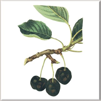 Large Black Cherry Fruit Ceramic Wall Tile