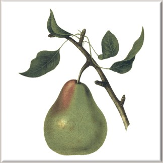 Large Pear Fruit Ceramic Wall Tile
