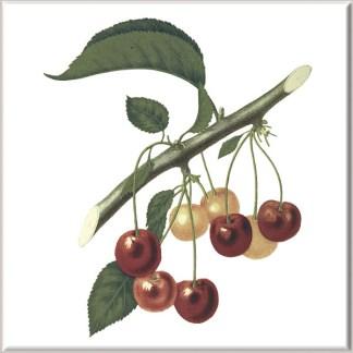 Red Cherry Fruit on Stem Ceramic Wall Tile